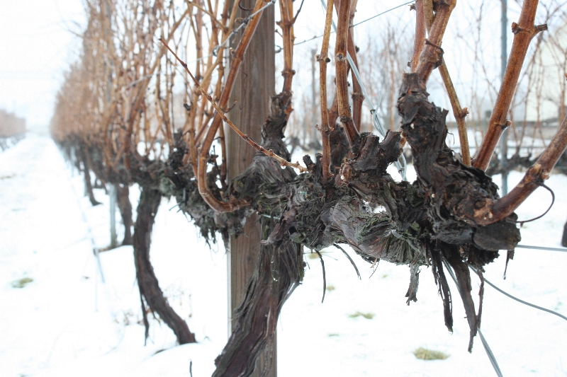 snow-and-vineyards-011